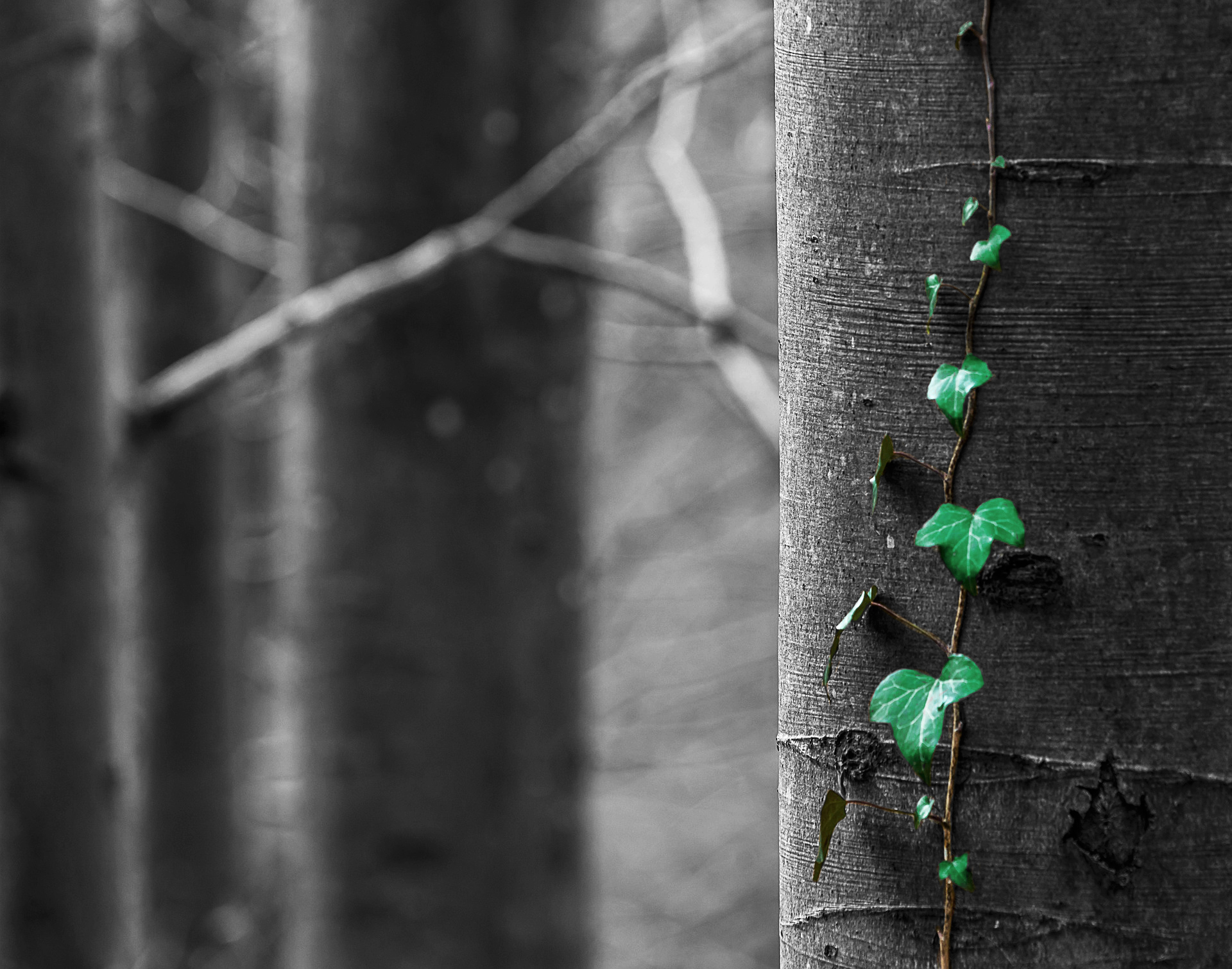 Prestige Decanters Tree Campaign