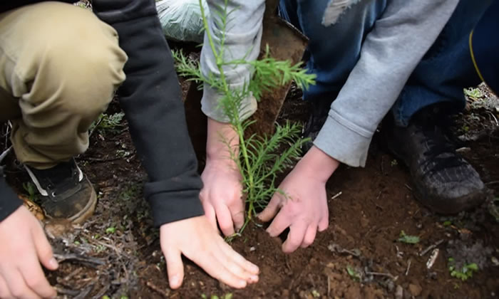 Plant Trees To Give Back To Earth